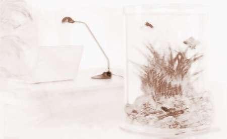 家庭鱼缸的摆放位置